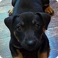 Adopt A Pet :: Yoora - Allentown, PA