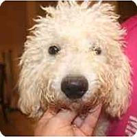 Adopt A Pet :: Ritchie - Arlington, TX