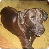 Adopt A Pet :: Elvis - North Jackson, OH