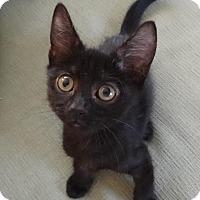 Adopt A Pet :: SALEM - Diamond Bar, CA