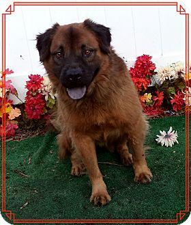 Retriever (Unknown Type) Mix Dog for adoption in Marietta, Georgia - KODIAK