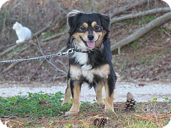 Spaniel (Unknown Type)/Terrier (Unknown Type, Small) Mix Dog for adoption in Newburgh, New York - MARCO