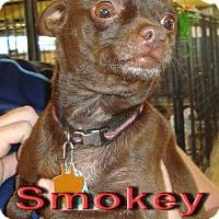 Adopt A Pet :: Smokey - Coleman, TX