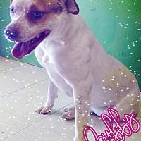 Adopt A Pet :: Buffy - Odessa, TX