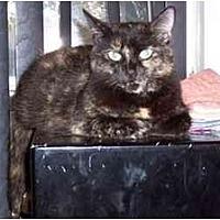 Adopt A Pet :: Molly - Simms, TX