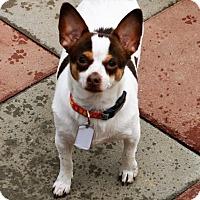 Adopt A Pet :: June Bug - Beavercreek, OH