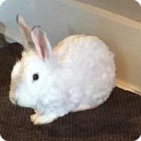 Angora, English Mix for adoption in Woburn, Massachusetts - Tokyo