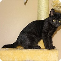 Adopt A Pet :: Duke of Earl-Baby born March22 - Taylor Mill, KY