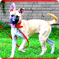 Adopt A Pet :: Jubilee~adopted! - Glastonbury, CT