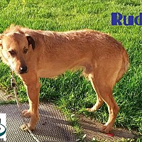 Adopt A Pet :: Rudy - Handsome Boy! - Huntsville, ON