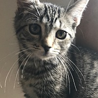 Adopt A Pet :: Prince - Cleveland, OH