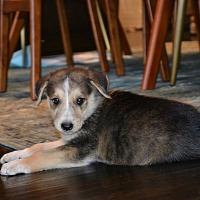 Adopt A Pet :: Freddie - oklahoma city, OK