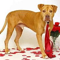 Adopt A Pet :: SPARTA - Sanford, FL