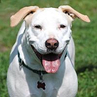 Adopt A Pet :: Ronnie - Spring Lake, NJ