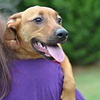 Adopt A Pet :: Colubrid - Snake Litter - Acworth, GA