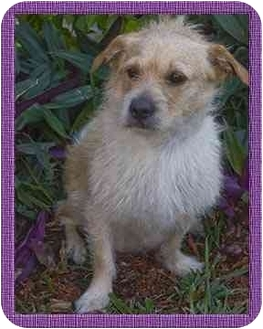 Terrier (Unknown Type, Small) Mix Dog for adoption in North Palm Beach, Florida - Queenie