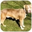 Photo 1 - Pit Bull Terrier/American Staffordshire Terrier Mix Dog for adoption in Chicago, Illinois - Ariel