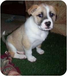 Husky Mix Puppy for adoption in Tustin, California - Kiana