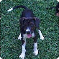 Adopt A Pet :: louise - Allentown, PA
