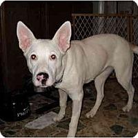 Adopt A Pet :: Miracle - Glastonbury, CT
