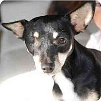 Adopt A Pet :: Joe - Vancouver, BC