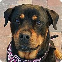 Adopt A Pet :: Molly II - Seffner, FL