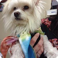 Adopt A Pet :: ALEJANDRO - Higley, AZ