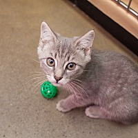 Adopt A Pet :: Tanner - Statesville, NC