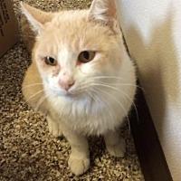 Adopt A Pet :: Luna - Fremont, OH