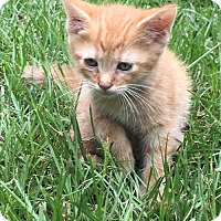 Adopt A Pet :: Alex - Williston Park, NY