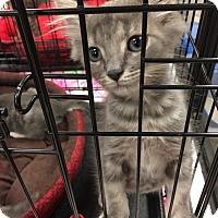 Adopt A Pet :: Maverick - Simpsonville, SC