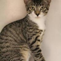 Adopt A Pet :: Macho - Hastings, MN