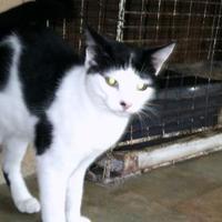 Adopt A Pet :: Runt - Hopkins, SC