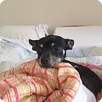 Adopt A Pet :: Macaria - Sparta, NJ