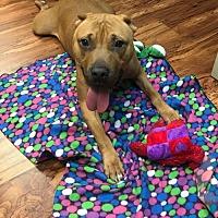 Adopt A Pet :: Bobby Living at Vet's office - Rowayton, CT
