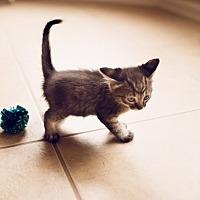 Adopt A Pet :: Buzz - Horn Lake, MS