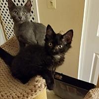 Adopt A Pet :: Spirit - Fairfax, VA