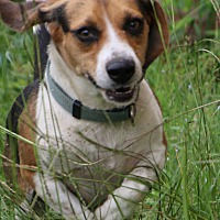 Adopt A Pet :: Nash - Warner Robins, GA