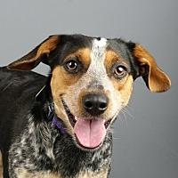 Adopt A Pet :: Minnie - Columbia, IL