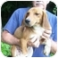 Photo 1 - Hound (Unknown Type) Mix Dog for adoption in Metamora, Indiana - Nike