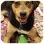 Photo 3 - Husky/Shepherd (Unknown Type) Mix Dog for adoption in Nanuet, New York - Sally