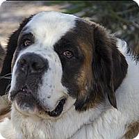 Adopt A Pet :: BERTHA - Glendale, AZ
