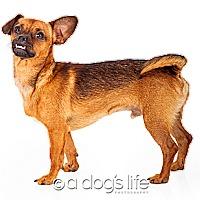 Adopt A Pet :: Bobby - Scottsdale, AZ