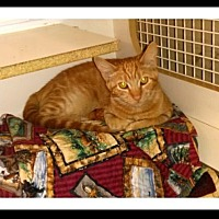 Adopt A Pet :: Zimba - San Bernardino, CA
