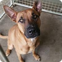 Adopt A Pet :: Titan - justin, TX