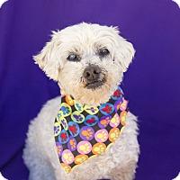 Adopt A Pet :: Sissy - Acton, CA