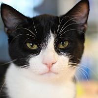 Adopt A Pet :: Kiwi - Marietta, GA