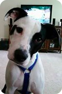 Terrier (Unknown Type, Medium) Mix Puppy for adoption in Brunswick, Ohio - Phineas