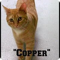 Adopt A Pet :: Copper - Muskegon, MI