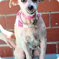 Adopt A Pet :: Ophelia - Waldorf, MD